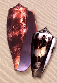 Magus Cones