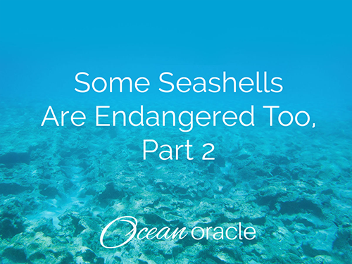Some Seashells Are Endangered Too, Part 2